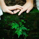 植物と発酵の力で話題のアルケミーとは!?